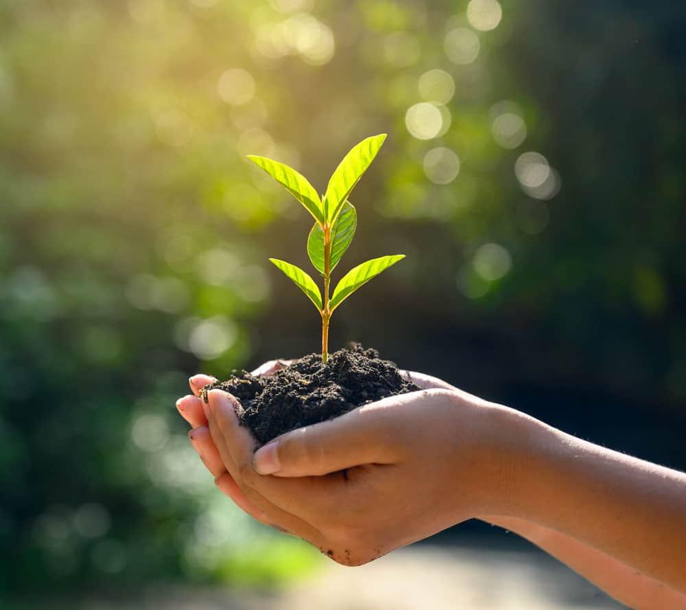 Nachhaltige Produkte bei Natural Naturfarben im österreichischen Onlineshop